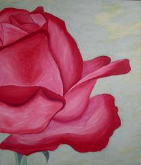 Stillleben, Natur, Rot, Rose