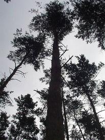 Perspektive, Willkür, Baum, Organisch