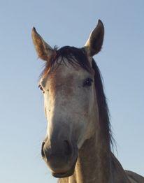 Pferde, Tiere, Gottessymbol, Opfertier