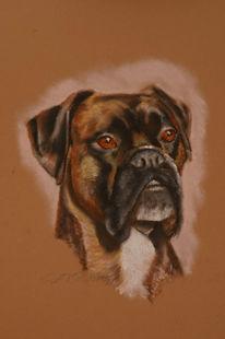 Boxer, Zeichnung, Tierportrait, Portrait