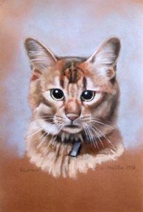 Katze, Zeichnung, Pastellmalerei, Portrait