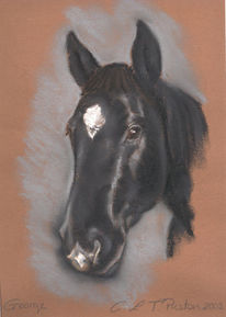 Pastellmalerei, Zeichnung, Hengst, Pferde