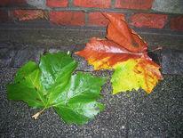Fotografie, Laub, Herbst