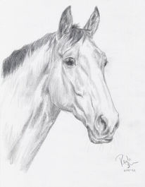 Pferd Zeichnung Bleistift 134 Bilder Und Ideen Zeichnen Auf