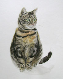 Tiere, Aquarellmalerei, Katze, Kater