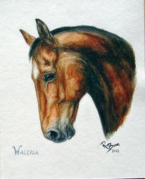 Warmblut, Portrait, Hannoveraner, Pferde