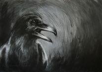 Krähe, Grafit, Dunkel, Vogel