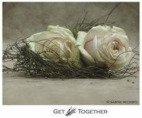 Rose, Fotografie, Stillleben