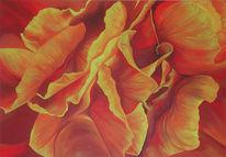 Rose, Rot, Blumen, Feuer