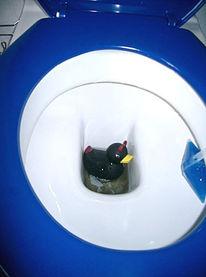 Toilette, Neues jahr, Fotografie