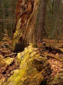 Splittern, Baumstamm, Wald, Fotografie
