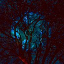 Baum, Nacht, Äste, Mond