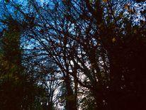 Nacht, Baumwesen, Zwischenraum, Fotografie