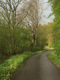 Erste büten, Weg, Regennass, Frühjahr