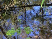 Blätter, Waldwasser, Baumstamm, Moor
