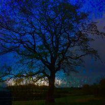 Nacht, Baum, Himmel, Blau