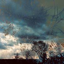 Himmel, Erde, Baum, Strauch
