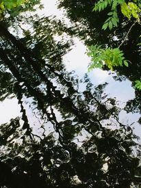 Raum, Blattgrün, Wasser, Fotografie