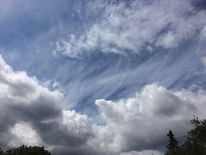 Baumspitzen, Himmel, Tag, Wolken