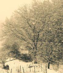 Vor dem wald, Baum, Schnee, Fotografie