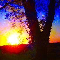 Himmel, Baum, Sonne, Abend
