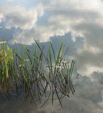 Schilf, Wolken, Wasser, Fotografie