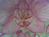 Orchidee, Malerei, Lila, Pink