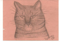 Katze, Winter, Mieze, Zeichnung