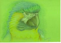 Gelb, Zeichnung, Polychromos, Blau