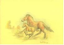Pferde, Zeichnung, Prärie, Fohlen