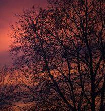Baum, Rot, Abendstimmung, Landschaft