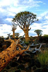 Landschaft, Fotografie, Baum, Afrika