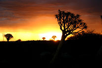 Landschaft, Fotografie, Afrika, Baum