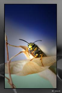 Insekten, Tiere, Wespe, Fotografie