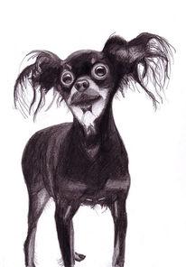 Zeichnung, Zeichnungen, Terrier