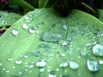 Blätter, Fotografie, Tropfen, Regen