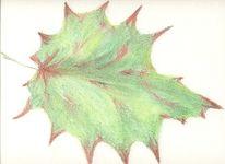 Kreide, Skizze, Zeichnung, Blätter