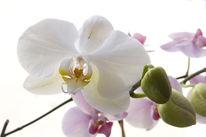 Orchidee, Stillleben, Canon, Fensterplatz