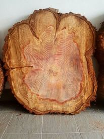 Mammutbaum, Maserung, Melden, Maria4045web