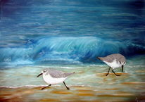 Sanderlinge, Meer, Ölmalerei, Vogel