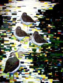 Kiebitz, Gegenlicht, Rotschenkel, Vogel