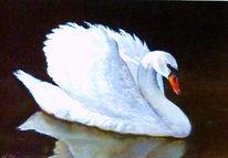 Tiere, Pastellmalerei, Vogel, Schwan