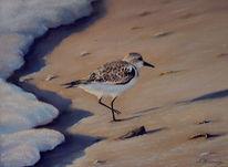 Pastellmalerei, Natur, Gemälde, Vogel