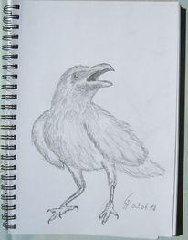 Vogel, Freiheit, Tiere, Zeichnungen