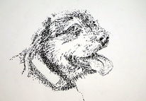 Rocky, Hund, Schnauzer, Zeichnungen