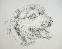 Hund riesenschnauzer rocky, Zeichnungen, Rocky