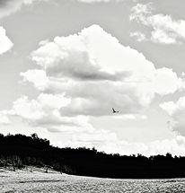 Vogel, Fliegen, Wolken, Schwarzweiß