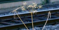 Herbst, Spinnweben, Stimmung, Bahndamm