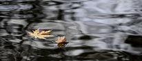 November, See, Blätter, Herbst