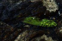 Glasklar, Grün, See, Sonnenlicht